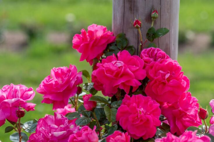 7 stunning flowers to make beauty fall into your garden